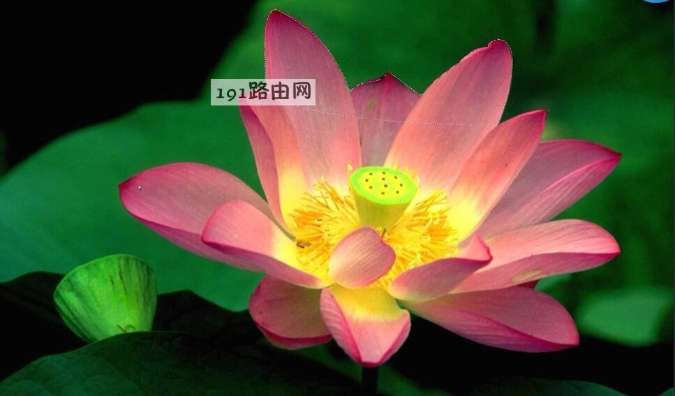 ps教程抠图(4)